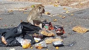 น่าเวทนา! ลิงเขาสามมุขเริ่มอดอยากอีกครั้งหลังพิษโควิด-19 ทำนักท่องเที่ยวเข้าพื้นที่ไม่ได้