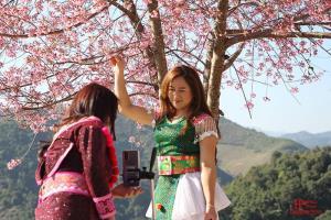 ภาพบรรยากาศดอกไม้บานที่แขวงหัวพันเมื่อต้นเดือนมกราคม 2564 (ภาพจากเฟซบุ๊ก Houaphan News)