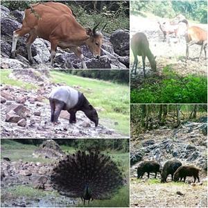 ตอกย้ำมรดกโลก ผืนป่าห้วยขาแข้งสมบูรณ์มาก!! หลักฐานจากกล้องดักถ่ายล่าสุด พบสัตว์ป่านานาชนิด บทพิสูจน์งานลาดตระเวนเชิงคุณภาพช่วยปกป้อง