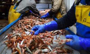 In Clip: พิษ BREXIT พ่น! EU สั่งห้ามนำเข้าอาหารทะเลจากบริษัทเล็กในสกอตแลนด์