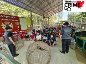 ป.บุกจับบ่อนไก่ชนสุโขทัย รวบเซียนเกือบครึ่งร้อย