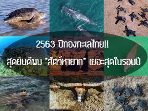 """2563 ปีทองทะเลไทย! สุดยินดีพบ """"สัตว์หายาก"""" เยอะสุดในรอบปี"""