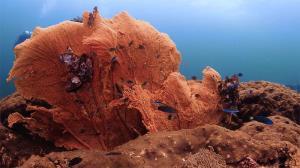 """อันซีนตะรุเตา """"เกาะตาลัง"""" มหัศจรรย์โลกใต้ทะเลสุดอะเมซิ่ง"""