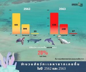"""ข่าวดี!! สัตว์ทะเลหายากเกยตื้นน้อยลง ปี'63เทียบปี'62 แต่ทำไม""""โลมาอิรวดีฯ""""ยังเสี่ยงเหมือนเดิม??"""