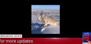 คาซัคสถาน หนาวสุดขั้ว ! สัตว์กลายเป็นก้อนน้ำแข็ง ที่อุณหภูมิติดลบ 51 องศา (ชมคลิป)