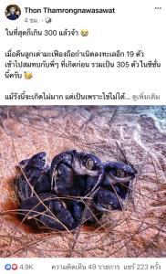 """ข่าวดี! """"ดร.ธรณ์"""" เผยฤดูกาลนี้ลูกเต่ามะเฟืองถือกำเนิดลงทะเลแล้ว 305 ตัว"""