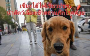 เซี่ยงไฮ้ไฟเขียว ปชช.นำ 'สัตว์เลี้ยง' เข้าสถานกักโรคด้วย