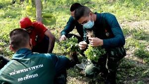 ทหารของประชาชน ช่วยเกษตรกรเก็บเกี่ยวซื้อผลผลิตผลกระทบโควิด-19
