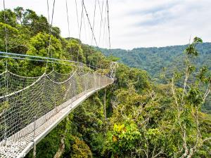 """สุดสูง สุดสวย """"11 สะพานเดินเหนือเรือนยอดไม้"""" ชมธรรมชาติมุมสูงจากทั่วโลก"""