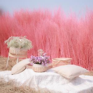 """ชมสวนไม้สีชมพูหวาน ที่ """"ChataThammachart"""" คาเฟ่สุดโรแมนติกต้อนรับเดือนแห่งความรัก"""