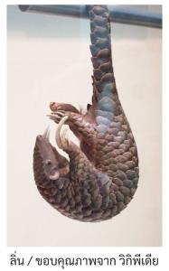 ค้างคาว : สัตว์ที่กำลังร้ายยิ่งกว่ายุง