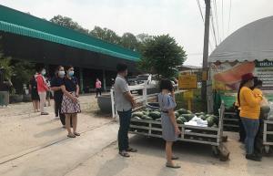 เจ้าของฟาร์มแตงโมชลบุรีพลิกวิกฤตผลผลิตล้นตลาด แจกฟรี 10 ตัน หวังชาวบ้านติดใจกลับมาอุดหนุน