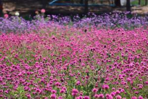 ภาพจากเพจ The Windmill at Khaokho