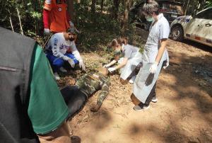 กรรมตามทัน! ป่าไม้โคราชรวบแก๊งเหิมบุกตัดพะยูงในแปลงปลูกป่า ต้นไม้ล้มทับดับคาที่ 1 ศพ
