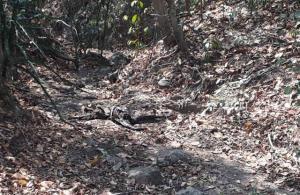 ยืนยันโครงกระดูกปริศนาไร้ศีรษะ เป็นร่างแม่เฒ่าพิษณุโลกหลงป่า 21 วัน คาดโดนหมาป่าแทะ