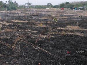 ทิ้งก้นบุหรี่เป็นเหตุ! ทำไฟไหม้ทุ่งหญ้าวอดกว่า 3 ไร่ หวิดลามติดสวนยางชาวบ้านที่สะเดา