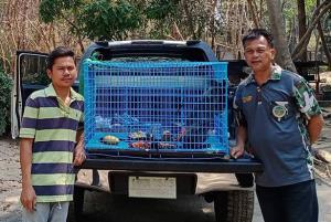 """พบ """"ค่างเทา"""" สัตว์ป่าคุ้มครองพัดหลงป่าชายแดนสุรินทร์ถูกไฟฟ้าช็อต นำส่งสถานีเพาะเลี้ยงสัตว์ป่าปลอดภัย"""