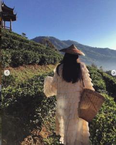 """ชุดเก็บชาอลังมาก  """"นุ่น วรนุช"""" จัดเต็มสายแฟชั่น สวยแพงกลางทุ่งชา"""