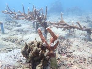 กรม ทช.เร่งหาตัวมือดีแอบหักยอดปะการังเกาะทะลุ จ.ประจวบฯ เสียหาย โทษจำคุกไม่เกิน 10 ปี