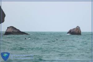 """พบ """"วาฬบรูด้า 2 แม่ลูก"""" การันตีความสมบูรณ์ท้องทะเลหมู่เกาะอ่างทอง"""