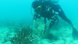 สั่งหยุดฟื้นฟูปะการังน้ำตื้นที่เกาะทะลุ หลังพบมีการถูกทำลาย