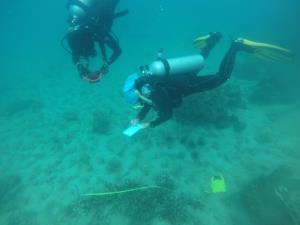 """""""รมว.ทส."""" สั่งสืบ ปะการัง เกาะทะลุ เสียหาย คาดเกิดจากการตัด หักกิ่ง """"กรมทะเล"""" ตั้งทีมสอบสวนข้อเท็จจริง เตรียมใช้ กม.จัดการหนัก"""