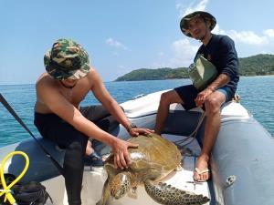 """ช่วยชีวิต """"เต่าตนุ"""" ลอยติดทุ่นไข่ปลาที่เกาะทะลุ"""