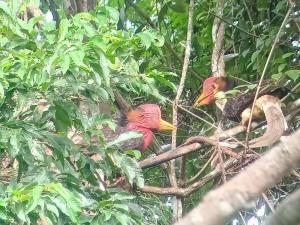 """ข่าวดี! """"นกชนหิน"""" เตรียมเป็นสัตว์ป่าสงวนลำดับที่ 20 ของไทย"""
