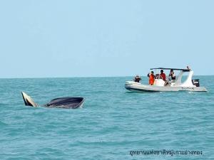 ท้องทะเลหมู่เกาะอ่างทองสมบูรณ์ พบวาฬบรูด้าโผล่เล่นน้ำโชว์แล้ว 4 ตัว