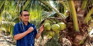 ดันผู้ปลูกมะพร้าวน้ำหอมราชบุรี เข้าระบบ GAP เพื่อพัฒนาคุณภาพและยกระดับอำนาจการต่อรองราคา