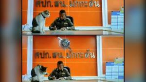 สุดฮา! น้องแมวขึ้นโต๊ะร่วมประชุมผ่านกล้อง ทำ ตร.ไม่มีสมาธิต้องมีคำสั่งให้นำลง