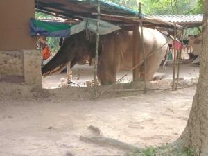 """พลายดื้อช้างผีสิงเขาใหญ่ก่อเรื่องอีก บุกพังอาคารสำนักงานฯ เชื่อฝังใจอยากกระทืบเจ้าหน้าที่แก้แค้น เผยผลสอบกรณีฆ่านักท่องเที่ยวคาเต็นท์ ผล """"เปลี่ยนตัวผู้ต้องหา"""" กลายเป็นช้างตัวอื่น !!??"""