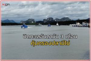 กรมประมงประกาศปิดทะเลอันดามัน 3 เดือน คุ้มครองปลามีไข่