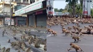 สัตวแพทย์ถาม? ฟ้องอุทยานฯ ได้ไหม กรณีลิงลพบุรีสร้างความเสียหาย ชี้เป็นสัตว์ป่าเหมือนกัน