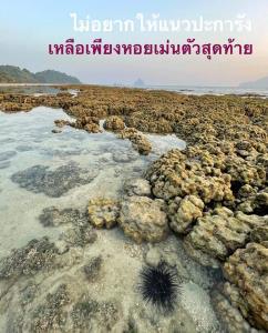 ภาพจากเพจ Thon Thamrongnawasawat