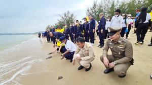 """กองทัพเรือจัดกิจกรรม """"รวมใจภักดิ์-รักษ์เต่า-ทะเลไทยร่วมใจปลูกป่าโกงกาง"""""""