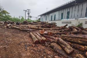 ปทส.สนธิหน่วยพญาเสือบุกทลายโรงงานเครือข่ายค้าไม้เถื่อน