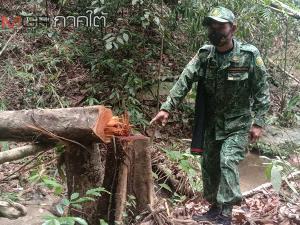 ตำรวจ ป่าไม้ อส.เบตง บุกจับชายรุกป่าปลูกสวนผลไม้พร้อมของกลาง