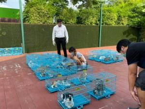 """""""สิระ""""  เปิดบ้านทรงไทยทำหมันหมา-แมวฟรี ชี้คนกับสัตว์ต้องอยู่ร่วมกันได้แบบไม่มีใครเดือดร้อน"""