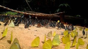 ภาพจากอุทยานแห่งชาติปางสีดา