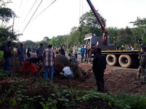 สลด! ช้างป่าเพศผู้วัย 12 ปีถูกไฟช็อตตายขณะเดินหาอาหารใน อ.บ่อทอง จ.ชลบุรี