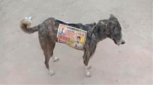 ทำไปได้! ผู้สมัครรับเลือกตั้งอินเดียใช้ 'หมาจรจัด' เป็นป้ายหาเสียงเคลื่อนที่