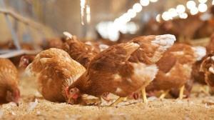 ซีพีเอฟขานรับนโยบายรัฐเร่งแก้ราคาไข่ตกต่ำ ให้ความร่วมมือปลดแม่ไก่ยืนกรง-เร่งส่งออกไข่