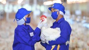 ซีพีเอฟย้ำเนื้อสัตว์กินได้ ปลอดภัย หลักสวัสดิภาพสัตว์หนุนสัตว์ปลอดโรค สร้างความมั่นคงทางอาหารอย่างยั่งยืน