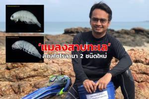 """นักวิจัย ม.สงขลานครินทร์ค้นพบ """"แมลงสาบทะเล"""" สกุลไซโรลานา 2 ชนิดใหม่ในอ่าวไทย"""