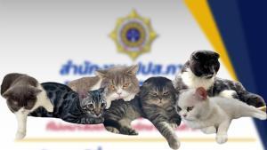 """ลุ้น ป.ป.ส.ประมูลแมว 6 ตัว จากเครือข่ายค้ายา """"กุ๊ก ระยอง"""" ราคาขายเริ่มต้นที่ 9 หมื่นบาท"""