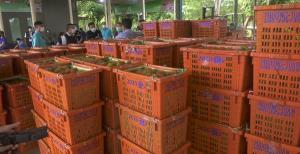 ตราดคุมเข้มล้งรับซื้อผลไม้ในพื้นที่ ป้องกันปัญหาทุเรียนไม่ได้มาตรฐานออกสู่ตลาด