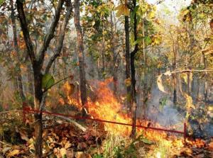 NIA ส่ง 3 นวัตกรรม แอปฯ แจ้งเตือน-ชิงเผา และเครื่องอัดชีวมวลเคลื่อนที่ แก้ปัญหาไฟป่าภาคเหนือ