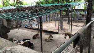 โควิด-19 ทำพิษ! หมาแมววัดเชียงใหม่เดือดร้อนด้วย กว่า 200 ชีวิตเริ่มขาดแคลนอาหาร-เหตุคนงดออกบ้านทำบุญ