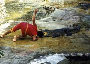 องค์กรพิทักษ์สัตว์แห่งโลกวอนทุกฝ่ายเร่งใส่ใจ 'สวัสดิภาพสัตว์' หลังข่าวฟาร์มจระเข้ล้มละลาย